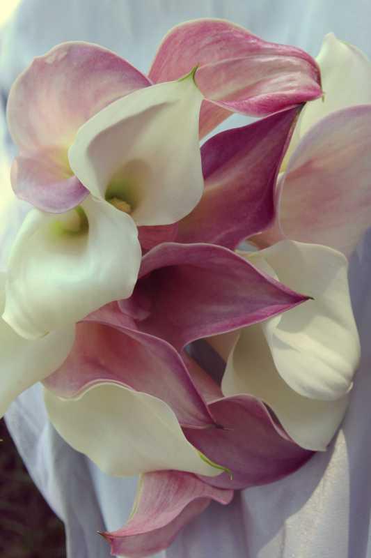 Fleurs artificielles 3 3 forum mariage 31 for Fleurs artificielles chez ikea